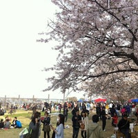 Photo taken at Yeouido Hangang Park by Hyeongchae K. on 4/21/2013