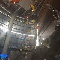 Photo prise au Denver Downtown Aquarium Restaurant par Pink A. le10/15/2016