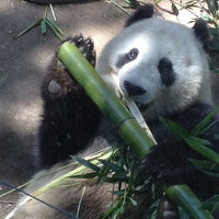 Photo taken at Giant Panda Research Station by Derek B. on 4/13/2015