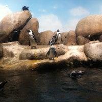 Photo taken at Penguin Tank by David W. on 10/8/2012