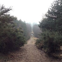 Photo taken at Lightwater Country Park by Robert L. on 2/17/2013