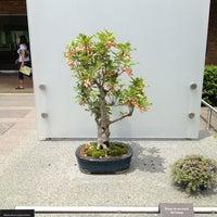 Photo taken at Chicago Botanic Garden Bonsai Studio #2 by William B. on 6/8/2013