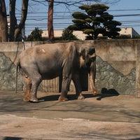 Photo taken at Inokashira Park Zoo by orimo on 3/15/2013