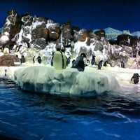 Photo taken at SeaWorld San Diego by Francis J. on 3/2/2013