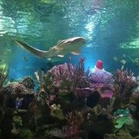 Снимок сделан в Океанариум пользователем Роман Ф. 1/8/2013