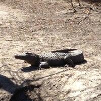 Photo taken at Alligator Adventure by Jeff R. on 3/6/2013