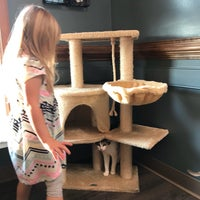 Photo taken at Cat Care Of Fayetteville by Elizabeth B. on 12/4/2017