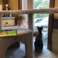 Photo taken at Cat Care Of Fayetteville by Elizabeth B. on 6/9/2017