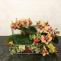 9/19/2015 tarihinde Violet Garden Çiçekliğiziyaretçi tarafından Violet Garden Çiçekliği'de çekilen fotoğraf