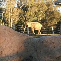 1/17/2013 tarihinde Vet J.ziyaretçi tarafından Elephant Odyssey'de çekilen fotoğraf