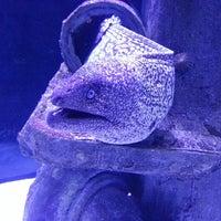6/21/2013 tarihinde Sergey L.ziyaretçi tarafından Antalya Aquarium'de çekilen fotoğraf