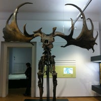 Photo taken at Naturkundemuseum by Mario on 4/7/2013
