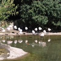 Photo taken at Safari de Peaugres by Mehmet K. on 6/10/2015
