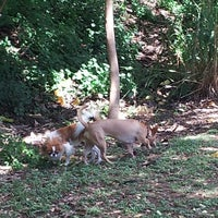 Photo taken at Moanalua Dog Park by Bruce H. on 3/7/2013