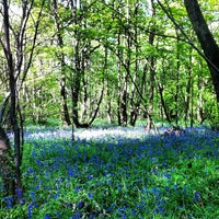 Photo taken at High Woods Country Park by LincolnGreen on 5/25/2013
