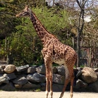 Photo taken at Roger Williams Park Zoo by Rick S. on 4/27/2013
