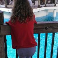 4/10/2013 tarihinde Karen F.ziyaretçi tarafından California Sea Lions Pool'de çekilen fotoğraf