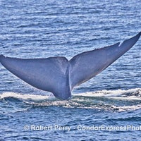 Photo taken at Condor Express Whale Watching by Condor Express Whale Watching on 8/26/2016