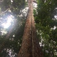 Photo taken at Museu da Amazônia (MUSA) by Patrick Saulo A. on 10/28/2016