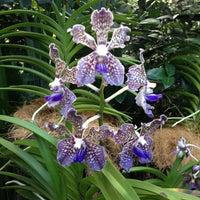 Das Foto wurde bei National Orchid Garden von Grover R. am 3/2/2013 aufgenommen