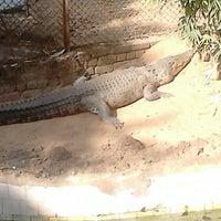 Photo taken at Nandankanan Zoological Park by V1SH4L on 12/15/2013