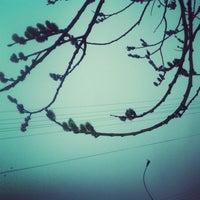 Photo taken at Полисад Психбольницы by Cherrylady🙀 on 4/3/2014