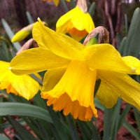Photo taken at Norfolk Botanical Garden by Tracey on 2/24/2013