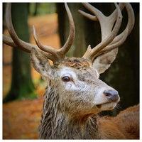 Photo taken at Wild- & Erlebnispark Daun by Marco K. on 10/28/2013