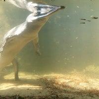 Photo taken at Crocodile Bank by Aryan S. on 10/3/2014