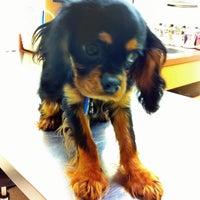 Photo taken at Banfield Pet Hospital by Mischa (Michele) K. on 4/13/2013