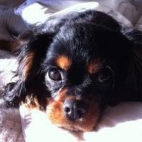 Photo taken at Banfield Pet Hospital by Mischa (Michele) K. on 3/21/2013