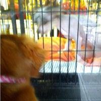 Photo taken at The Pet Corner by @RickNakama on 10/29/2012