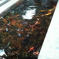 Photo taken at Nauset Fish & Lobster Pool by Matthew B. on 12/30/2012