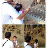 Photo taken at Mini Zoo Taman Teruntum by Ash H. on 5/12/2014