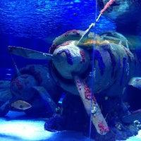 12/31/2012 tarihinde Mirac🚲 K.ziyaretçi tarafından Antalya Aquarium'de çekilen fotoğraf