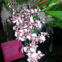 Photo taken at Monet's Garden at The New York Botanical Garden by Z. Joselyn Q. on 3/1/2013