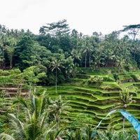Снимок сделан в Tegallalang Rice Terraces пользователем Metodi 10/15/2016