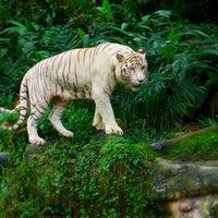 Foto tirada no(a) Singapore Zoo por R L. em 3/3/2013