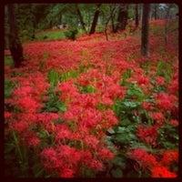 Photo taken at Kinchakuda Manjushage Park by Ukiko A. on 10/1/2012