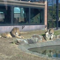 Photo taken at George H. Carroll Lion Habitat by RJ S. on 1/7/2013