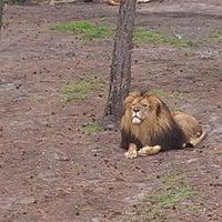 Photo taken at Serengeti Park by Thorsten P. on 6/23/2013