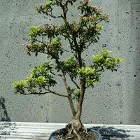 Photo taken at Bonsai Exhibition Garden, North Carolina Arboretum by Thomas P. on 6/23/2013