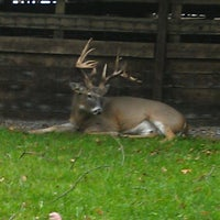 Photo taken at Double Diamond Deer Ranch by Mandy D. on 10/17/2013