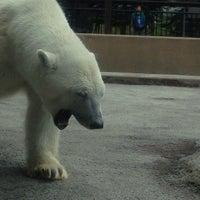 Photo taken at Polar Bear Museum by Neo B. on 7/29/2013