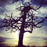 Photo taken at Bandon Dunes Golf Resort by Lane M. on 11/22/2012