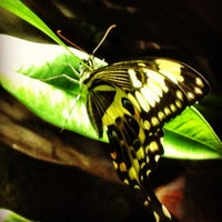 Photo taken at The Butterfly Conservatory at the American Museum of Natural History by Dan L. on 1/26/2013