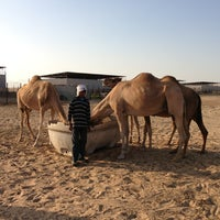 Photo taken at Camel Farm by Andrei A. on 11/3/2013