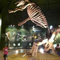 Photo taken at Museo de Paleontología by Patricia G. G. on 3/10/2013