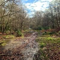 Das Foto wurde bei Epping Forest Track von Luis P. am 2/9/2014 aufgenommen