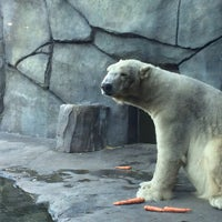 Photo taken at Polar Bear Odyssey At Como Park by Ken T. on 11/3/2013